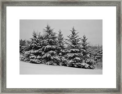 Framed Print featuring the photograph Frosted Trees by Kathleen Sartoris