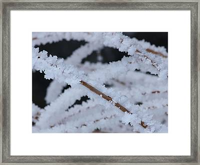 Framed Print featuring the photograph Frosted Twigs by DeeLon Merritt