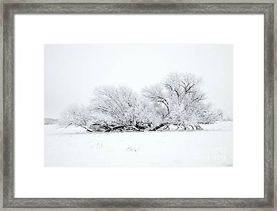 Frosted White Framed Print