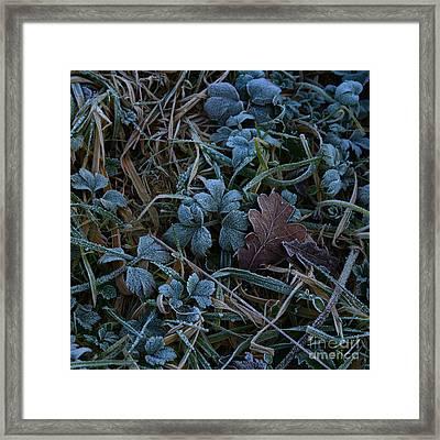 Frostings 4 Framed Print