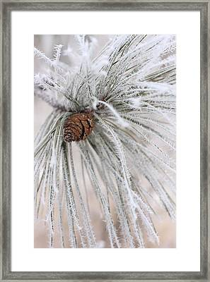 Frosty Framed Print
