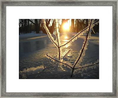 Frosty Branches At Sunrise Framed Print