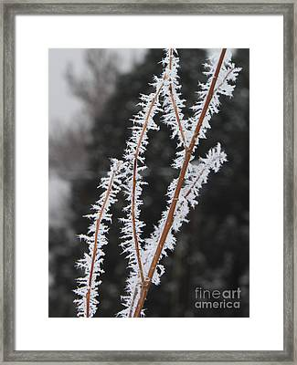 Frosty Branches Framed Print by Carol Groenen