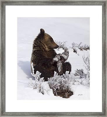 Frosty Feet-signed Framed Print