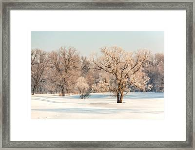 Frosty Forest Framed Print