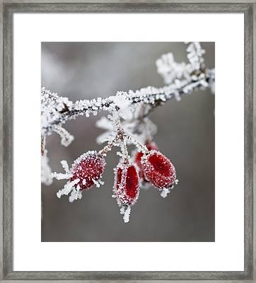 Frosty Garden Framed Print by Frank Tschakert