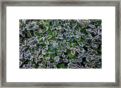 Frosty Hedgerow Framed Print