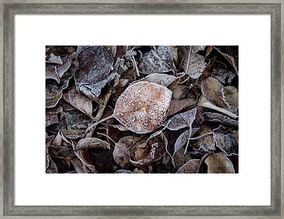Frosty Leaves In A Small Pile Framed Print