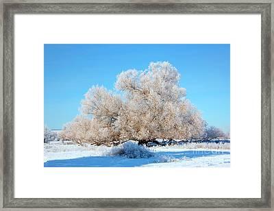 Frosty  Framed Print by Mike Dawson