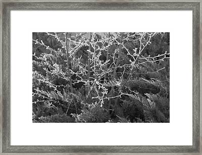 Framed Print featuring the photograph Frosty Morning # 3 by Antonio Romero