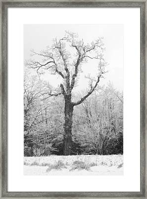 Framed Print featuring the photograph Frosty Old Tree by Ken Barrett
