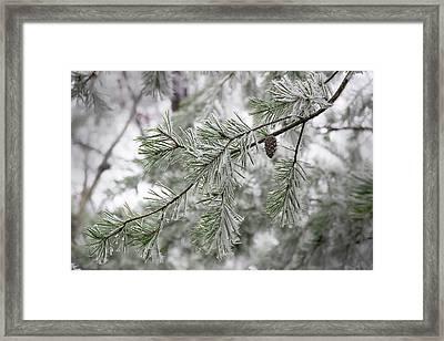 Frosty Pinecone Framed Print