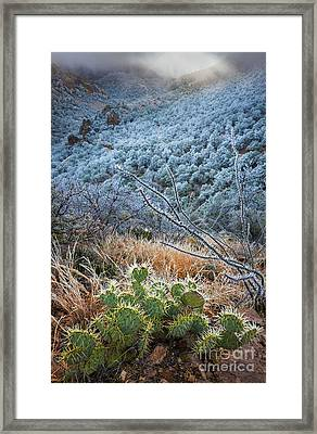 Frosty Prickly Pear Framed Print