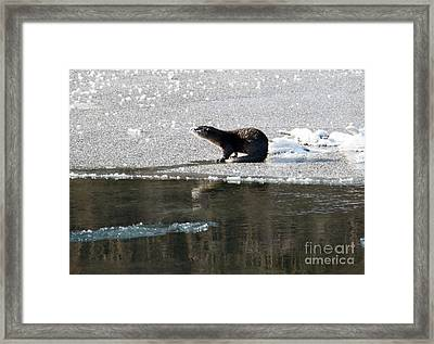 Frosty River Otter  Framed Print by Mike Dawson