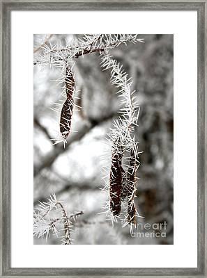 Frosty Seed Pods Framed Print by Carol Groenen