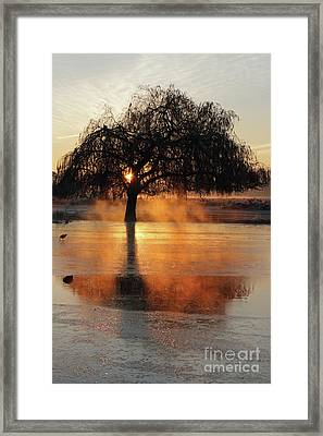 Frosty Sunrise In Bushy Park London 2 Framed Print