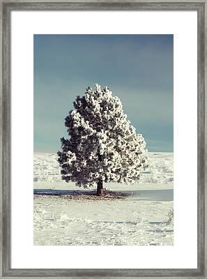 Frosty The Tree Framed Print
