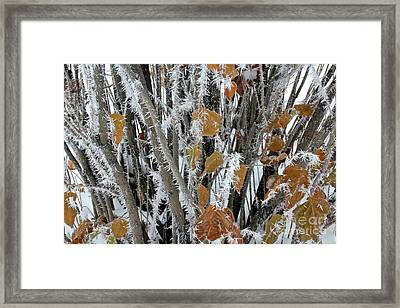 Frosty Touch Framed Print