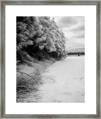 Frosty Treeline Framed Print