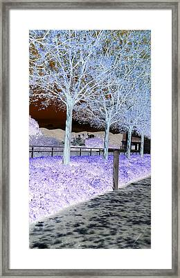 Frosty Trees At The Getty Framed Print