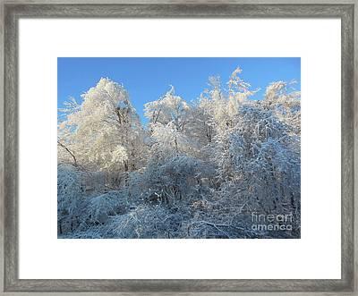 Frosty Trees Framed Print