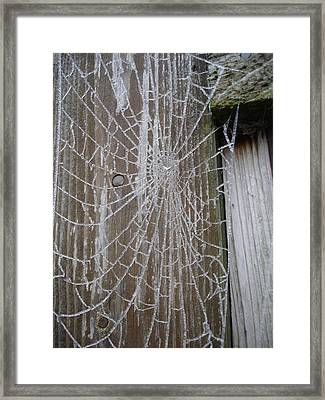 Frosty Web Framed Print