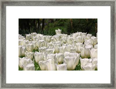 Froth Framed Print