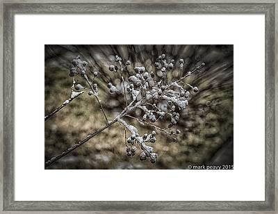 Frozen Berries Framed Print