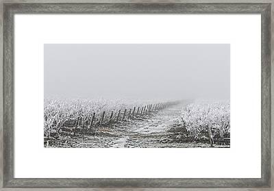 Frozen Blueberry Mist Framed Print