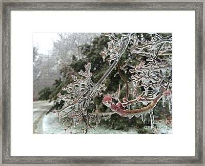 Frozen Buds Framed Print