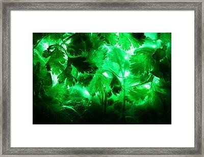 Frozen Cilantro Framed Print