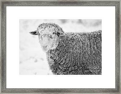 Frozen Dinner Framed Print