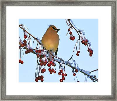 Frozen Dinner  Framed Print by Tony Beck