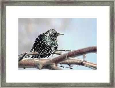 Frozen Feathers Framed Print by Alan Look