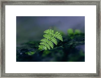Frozen Fern II Framed Print
