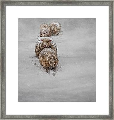 Frozen Fleece Framed Print