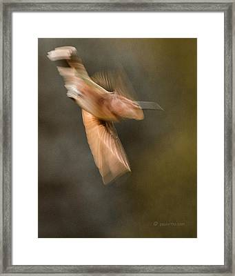 ...frozen Flight Hummingbird.... Framed Print