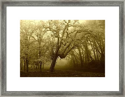Frozen Forest Framed Print by Cathie Tyler