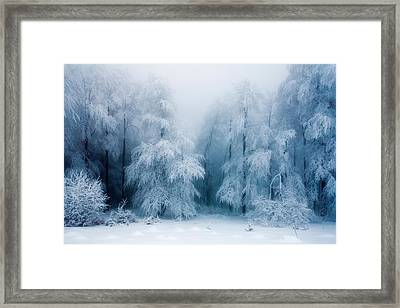Frozen Forest Framed Print by Evgeni Dinev