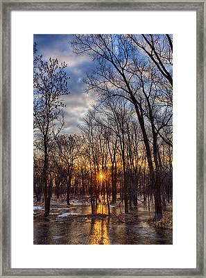 Frozen Forest Floor Framed Print