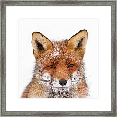 Frozen Fox Framed Print
