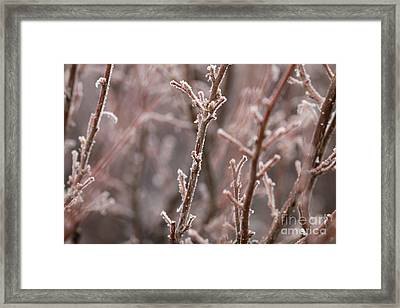Framed Print featuring the photograph Frozen Garden by Ana V Ramirez