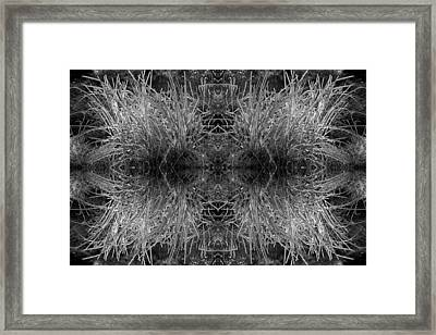 Frozen Grass Abstract In Bw Framed Print by Gary Cloud