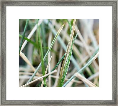 Frozen Grass Framed Print