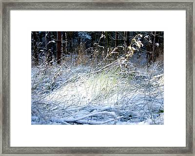 Frozen Grass Framed Print by Svetlana Sewell