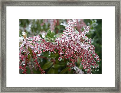 Frozen In Time Framed Print by Cindy Lee Longhini