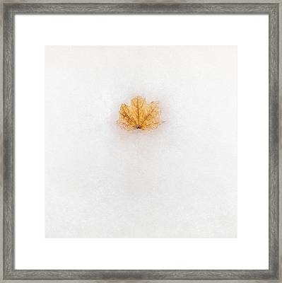 Frozen In Time Framed Print by Scott Norris