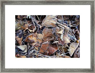 Frozen Framed Print by JAMART Photography