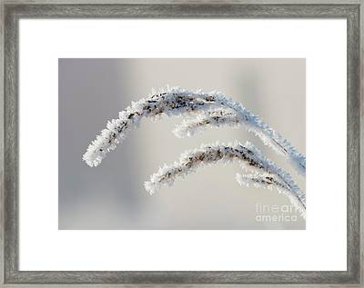Frozen Lace Framed Print by Mike Dawson