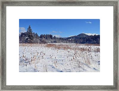 Frozen Lake  Framed Print by Sabine Jacobs
